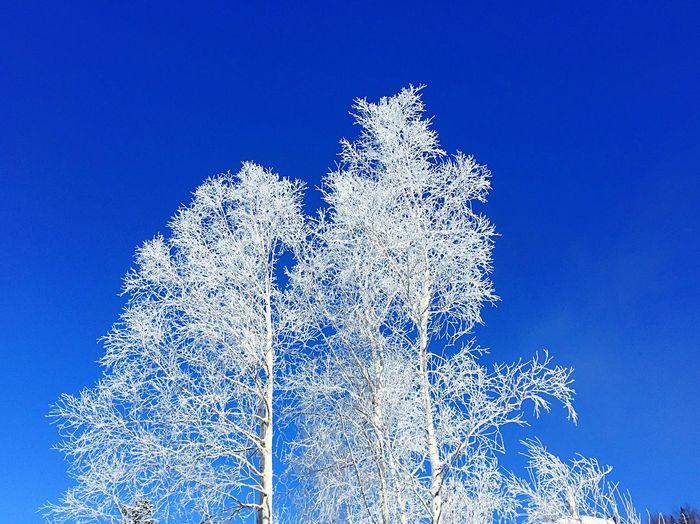 Blue Nature Low