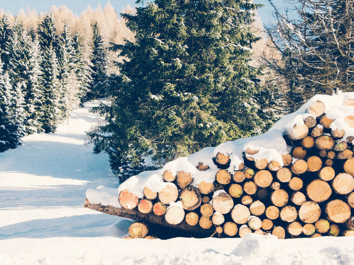 Stack Of Logs On Snow Covered Landscape