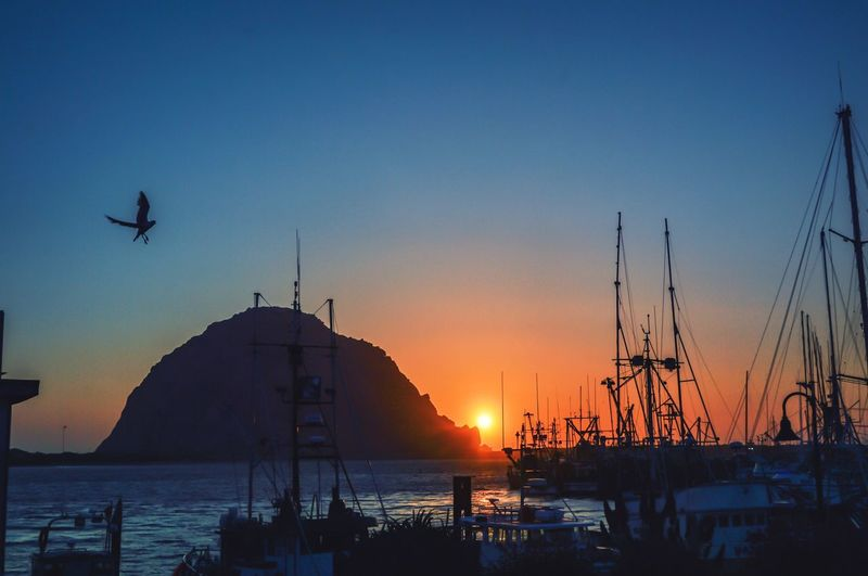 PORT Sunset Sea Silhouette Nature Beauty In Nature Sun California Dreamin Scenics Outdoors Sunlight Clear Sky Tranquility No People Beach Vacations Day Flying Nautical Vessel Bird Sky Water Summer Exploratorium Capture Tomorrow