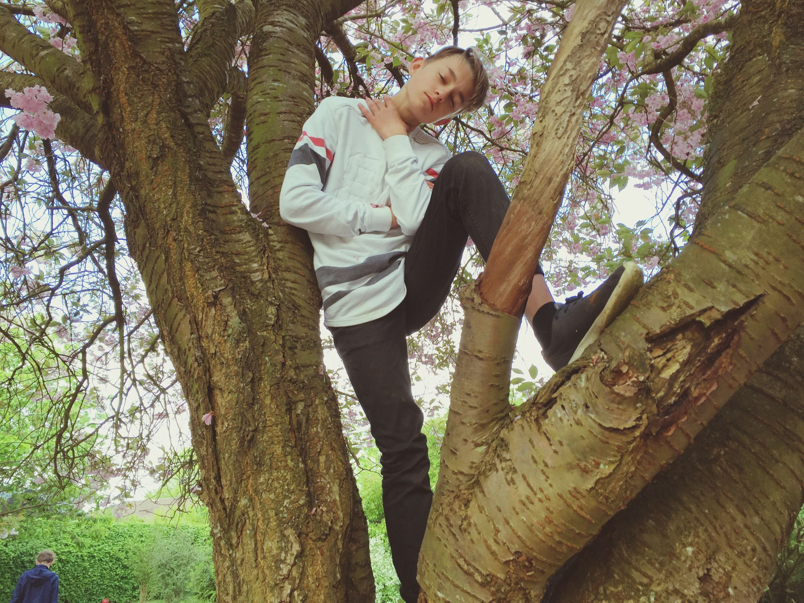 tree, lifestyles, leisure activity, casual clothing, tree trunk, young adult, person, full length, branch, three quarter length, low angle view, childhood, standing, young women, front view, park - man made space, boys, growth