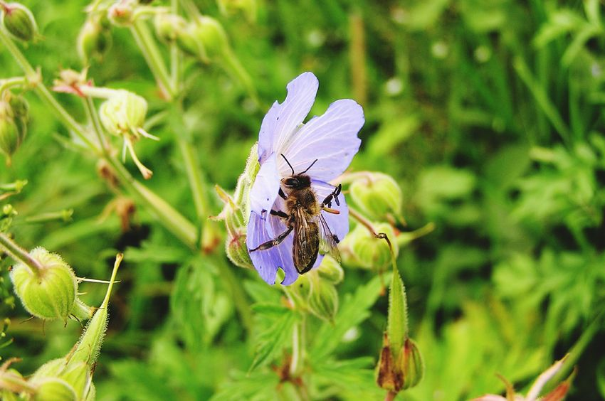 Nature Insect Flower Bee