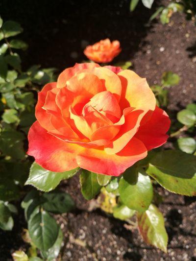 Flowers,Plants & Garden Flower Artofphotography Colorful Beautiful Nature BeautifulFlower🌺 Beautifulflowerseveryday