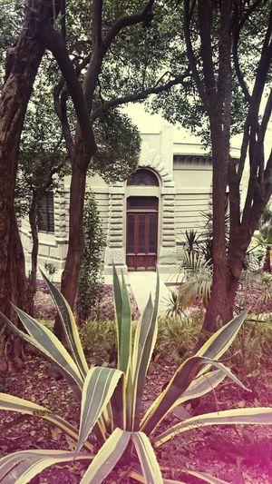 Mexico City Paisaje Natural Penca De Tequila