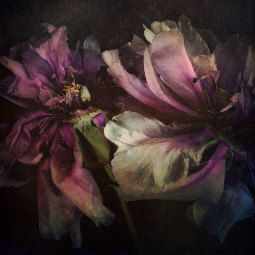 EyeEm Best Shots IPhoneography NEM Submissions NEM Painterly Flowers EyeEm Best Shots - Flowers