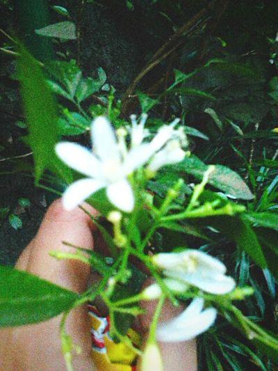 Ada bunga-bunga<3 Jakartaku  Jakarta Indonesia Flowers, Nature And Beauty Enjoying Life Sweet Things Bungabunga