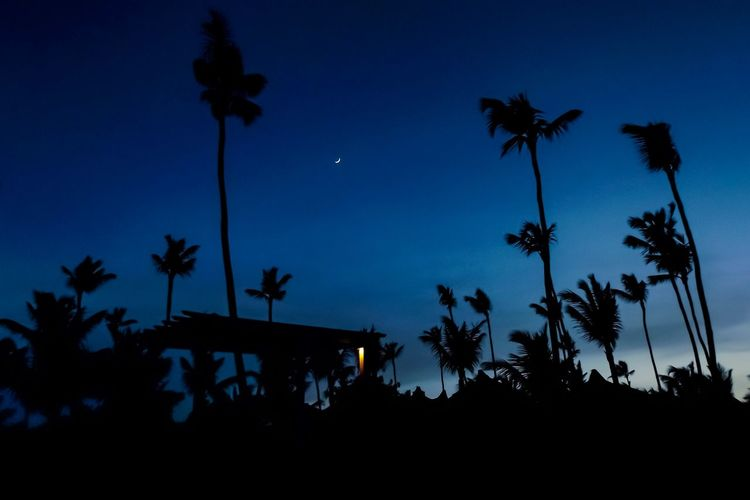 Sky Silhouette Palm Tree Tropical Climate Tree Low Angle View Plant Nature Beauty In Nature Blue Scenics - Nature Built Structure Coconut Palm Tree No People Growth Tranquil Scene Dusk Night Outdoors