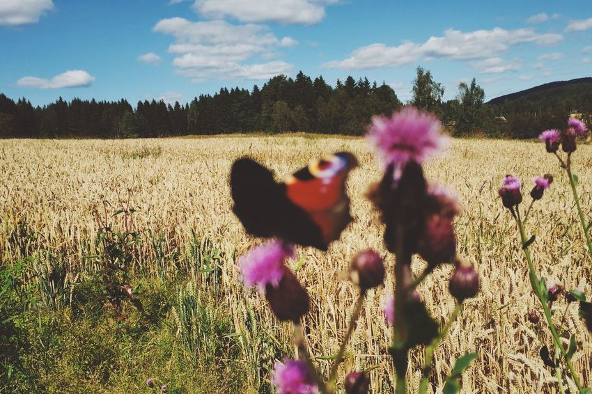Butterfly fields // Butterfly Field Flower Nature Growth Sky Animal Themes Domestic Animals Beauty In Nature Cloud - Sky Plant Day Outdoors Sunlight Mammal No People Landscape Tree Rural Scene Grass Flower Head
