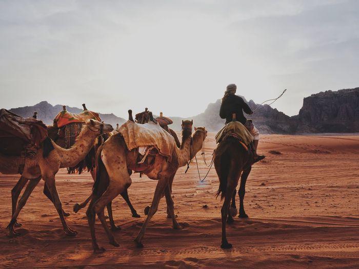 Bedouin of Wadi
