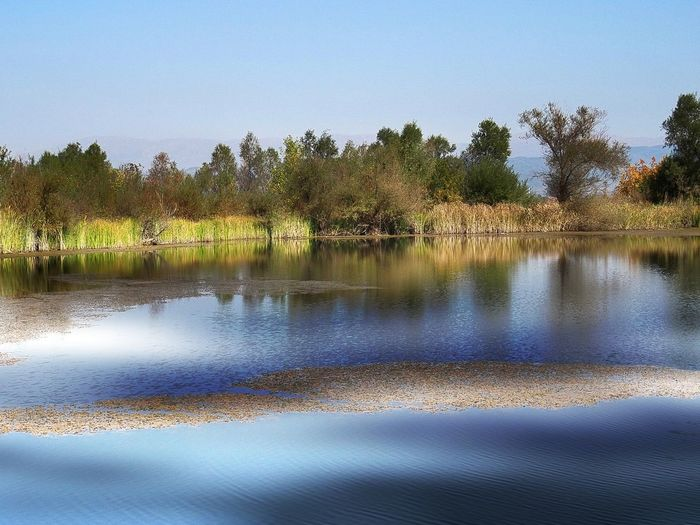 Tree Water Plant Tranquility Lake Tranquil Scene Beauty In Nature Scenics - Nature Sky Reflection Nature No People Non-urban Scene Clear Sky Day Idyllic Growth Waterfront Landscape