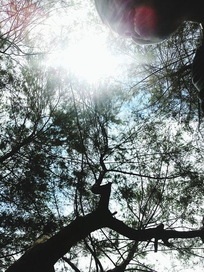 Tree Nature Sky Beauty In Nature Outdoors Low Angle View Day Silhouette Growth Backgrounds First Eyeem Photo