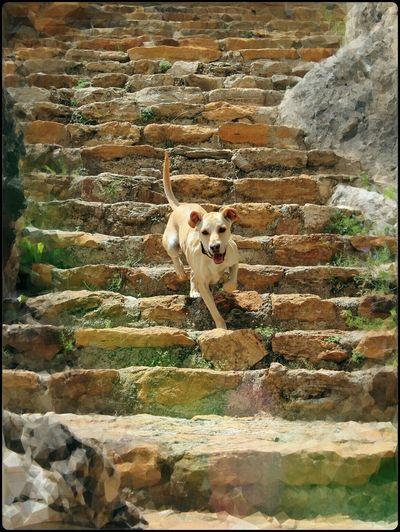 Buddha Nature Dog Sintonia Steps