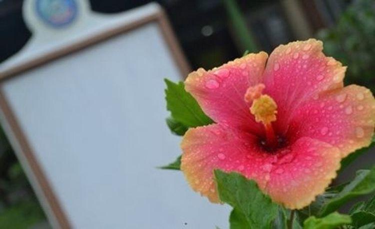 Nuartapp ECE131 Thespians Goldenrectangle