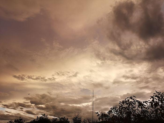 sky and clouds Tree Sunset Sky Cloud - Sky