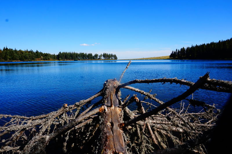 Lac de Servières Water_collection Blue October Breathe Lanscape Lake View Tree Water Clear Sky Lake Sky Landscape Pine Tree Calm