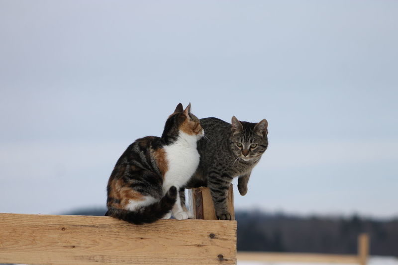 Animal Behavior Barn Cats Day Domestic Animals Domestic Cat Feline Mammal Nature No People Outdoors Pets Stable Life Tabby Cat Tortoiseshell Cat EyeEmNewHere The Great Outdoors - 2017 EyeEm Awards Pet Portraits