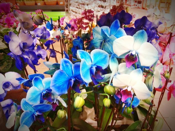 Beautiful flowers Colorful Flowers First Eyeem Photo