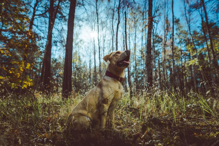 Dog sitting on field in forest