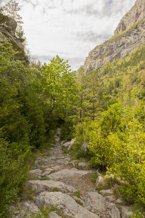 Beauty In Nature Day Green Color Growth Landscape Mountain Nature Nature No People Ordesa Outdoors Plant Pyrinees Relaxing Rock - Object Scenics Sky SPAIN The Way Forward Torla, Tranquil Scene Tranquility Tree Trekking Water