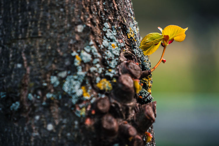 Close-up of yellow flowering plant on tree trunk