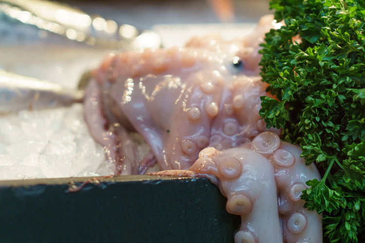 Close-Up Of Octopus With Herbs At Market