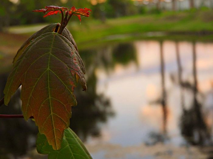 Leaf Focus On Foreground Nature Autumn Close-up Green Color Day Outdoors Growth Plant Beauty In Nature Change No People Fragility Branch Tree Freshness