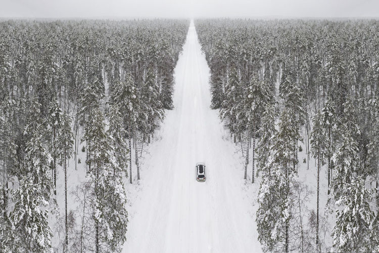 Panoramic shot of trees on field during winter