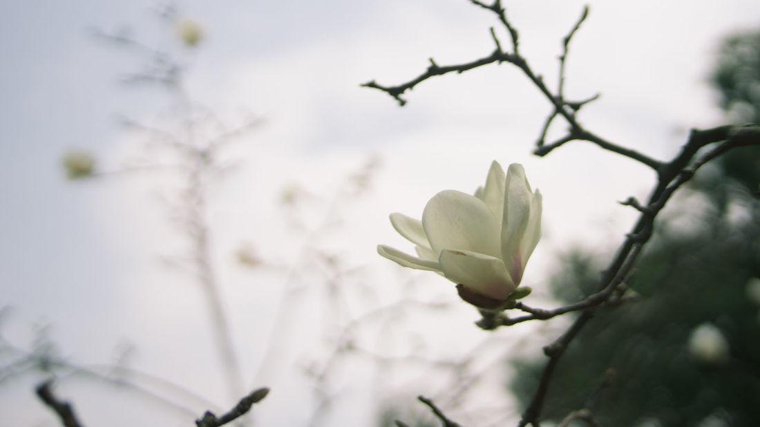 Flowers Growth Guangzhou Macro Macro Photography Plants Traveling White