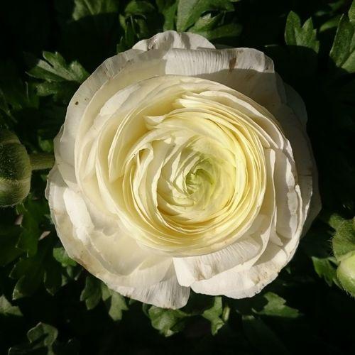 HAPPY WOMEN'S DAY Flower Flowers Rose - Flower Marmaris, Turkey Cevremdekisessizhareketler Mugla Nofilter Nofilternoedit Natural Life Nature Photography NaturelColor