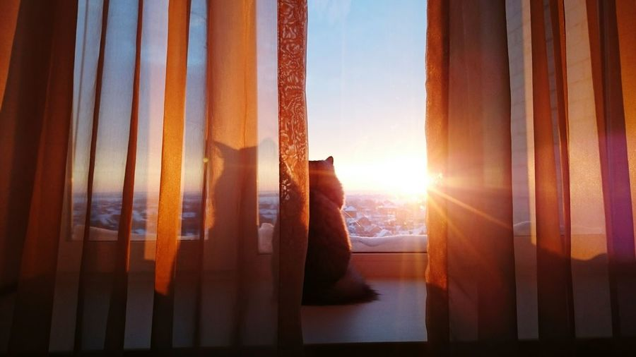 Hello World Hi! Eeyem Photography Taking Photos Cat Lovers Cat Watching Sunrise Ctiy Sun Sunshine Cat My Cat Luna Russia привет мир кошка Моя кошка солнце☀ солнце утра восход