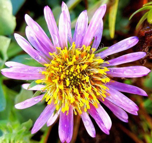 Millennial Pink Flower Close-up Freshness Capture The Moment Huaweip9lite Flower Head