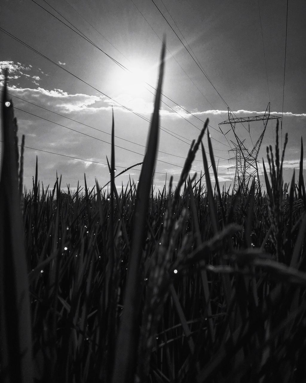 field, growth, nature, cable, grass, electricity pylon, sky, electricity, no people, sun, plant, tranquility, sunlight, outdoors, beauty in nature, day