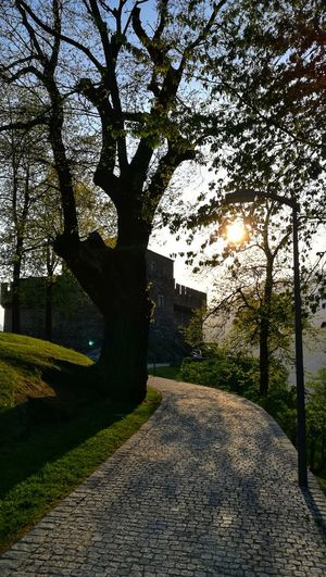 Bellinzona Switzerland Ticino Ticino Turismo Eye4photography  Sunlight Light Castle Sasso Corbaro Tree Sky Fort Fortress Cobblestone Pathway Sunbeam