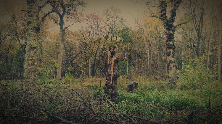 Autumn Autumn Colours Autumn 2015 Autumn Trees Dead Tree Woods A Walk In The Woods Nature Nature Photography EyeEm Nature Lover HTC One