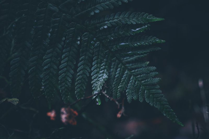 Desktop Backgrounds Leaf Close-up Plant Part Plant Green Color Growth No People Nature Day Beauty In Nature Pattern Fern Focus On Foreground Selective Focus Natural Pattern Outdoors Fragility Leaf Vein Vulnerability  Leaves