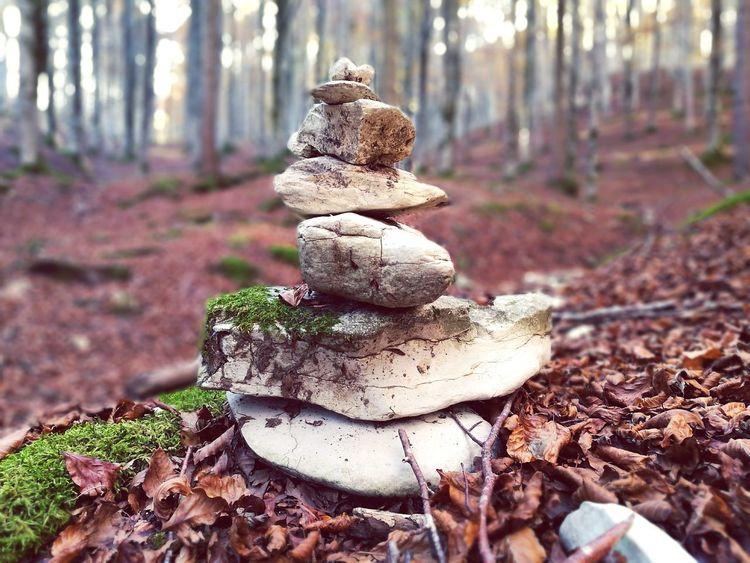 Passeggiando Nature Bosco Sassi Ritrovamenti Passeggiate Autunno  Autumn Foglie