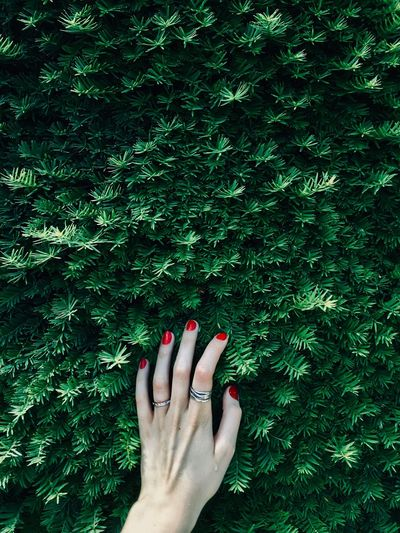 Cropped hand of woman against plant