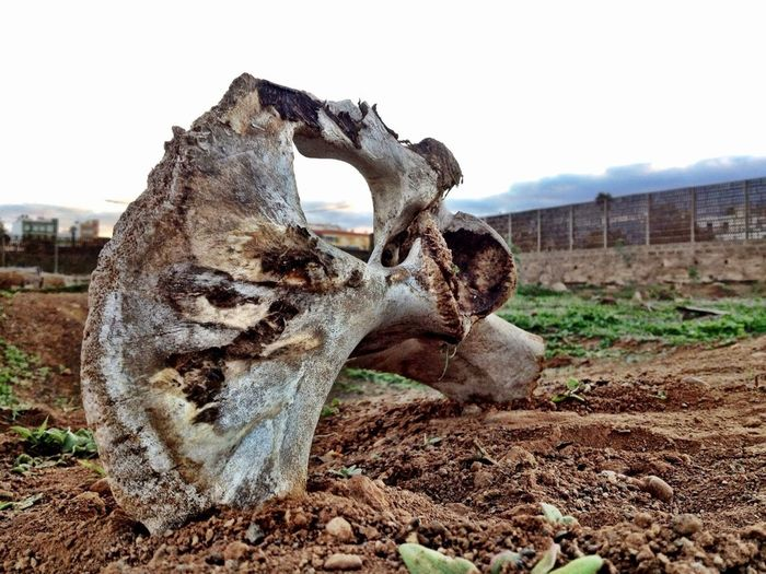 Desert Death Bones Hueso