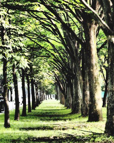 並木道 イマソラ 緑