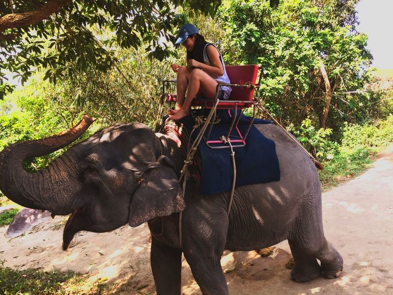 Thailand Animal Animal Photography Activity Elephant Trekking Elephant Neither Women