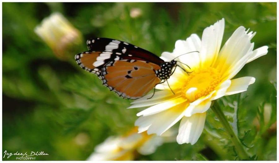 Flowers Butterfly ❤ Fun Nikon First Eyeem Photo