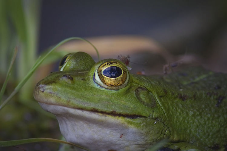 frog with friends ;-) Amphibian Animal Themes Animal Wildlife Animals In The Wild Close-up Day Focus On Foreground Frog Green Color Malephotographerofthemonth Moskito Net Nature Naturelovers No People One Animal Outdoors The Great Outdoors - 2017 EyeEm Awards