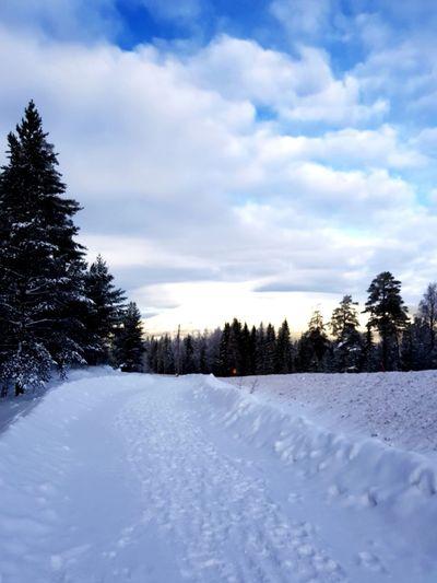 Tree Snowing