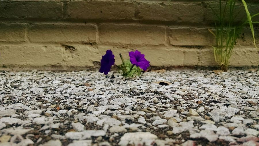 This little gem found a way. Proof that nature is tougher than man. Life Always Finds A Way Life Finds Its Own Way To Exist Life's Power Nature's Strength Nature's Takeover Check This Out Nature_collection EyeEm Nature Lover EyeEm Best Shots - Nature Protecting Where We Play