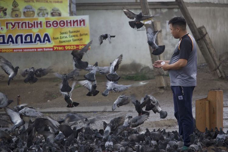 Animal Animal Head  Animal Themes Animals In The Wild Beak Bird Composition Enjoyment Focus On Foreground Friendship Fun Mongolia Ulaanbaatar No People Occupation One Animal Perching Perspective Picoftheday Pigeon Side View Togetherness Two Animals Wildlife Zoology