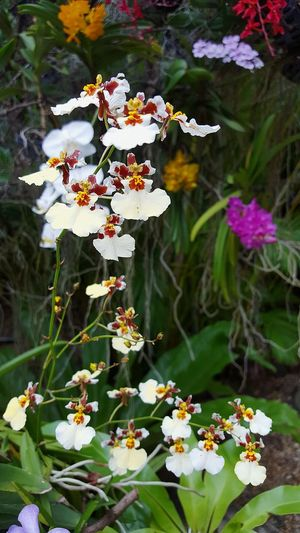 Flower Outdoors Petal Nature Beauty In Nature Flower Head Plant No People Freshness Springtime Close-up Orchidflower Hanging Orchids Garden Orchidslover Orchid Flower Orchid Blossoms Orchids Orchid Orchids In Bloom Orchid Love Blossom Outdoor Photography Freshness Focus On Foreground
