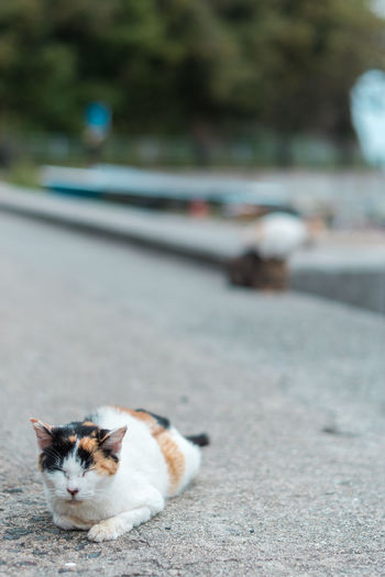 Cat on the road