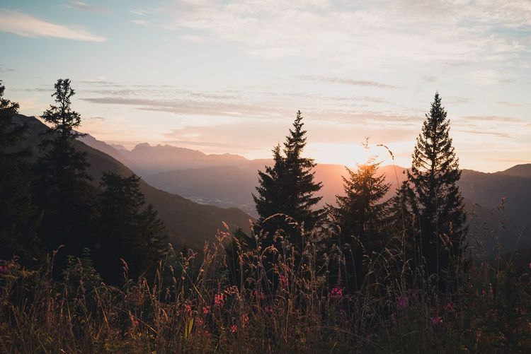 Summer Sunset in the mountains Mood Summer Panorama Plants Adventure Nature Live Authentic Sky Nature Mountain Sunset Growth Beauty In Nature No People Landscape Tree Outdoors