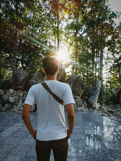 Rear view of young man looking at trees while standing in forest