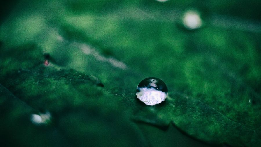 Green Color High Angle View No People Day Nature Water Outdoors Close-up Beauty In Nature UnderSea Nature Macro Macro Photography Macro Nature