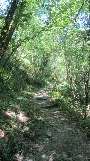 Der Weg Ist Das Ziel France GR65 Via Podiensis Beauty In Nature Branch Day Forest Grass Green Color Growth Landscape Nature No People Outdoors Plant Scenics The Way Forward Tranquil Scene Tranquility Tree